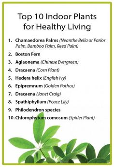 Top 10 Indoor Plants for Healthy Living