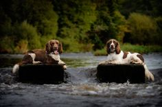 springers-steppingstones.jpg