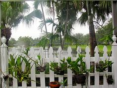 orchids hanging on a section of white picket fence white picket fences