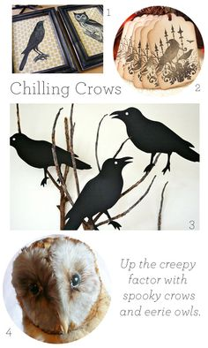 Up the spooky factor with crows.