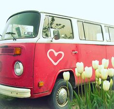 Love Bus & Tulips