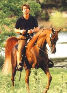 Patrick Swayze and Tammen, his Straight Egyptian Arabian stallion. Swayze bought Tammen from the same farm my Grandparents worked at, as vets. An amazing guy who loved amazing horses.