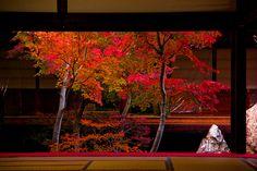 garden view at Kennin-ji, Kyoto, Japan