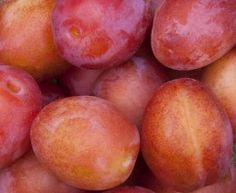 How To Grow Plum Trees In Pots And Containers...Sue 2013