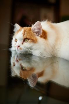The reflection         kitty