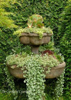 Succulents in fountain | The Graceful Gardener