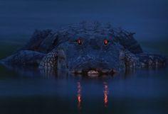 Rare wildlife photos highlight winning entries in worldwide contest