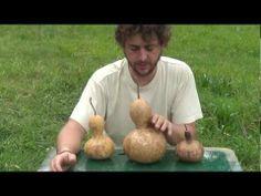 Como Sacar Semilla De Calabaza Peregrina || Semillas Organicas || La Huertina De Toni - YouTube