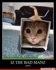 WHERES DAH KITTY??  deres dah kitty!!!