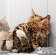 Sometimes you just need a hug kitty cats, animal pictures, mothers day, pet, baby kittens, warm fuzzies, baby animals, animal babies, baby cats