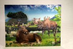3D Poster Moose at theBIGzoo.com, a toy store with over 12,000 products.
