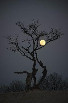 moon and tree...