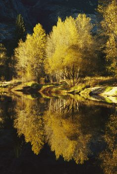 Autumn trees reflected in the Merced River.  Location:	Yosemite National Park, California.