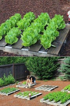 Hmm...pallet gardening-no weeds between plants