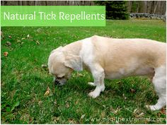 Natural Repellent for Ticks