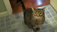 Now this is how you train a cat. It's like it's a dog but has more karma power.