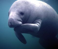 To Florida so I can see another Manatee! I don't care who thinks they're ugly, I think they're freakin' cute!