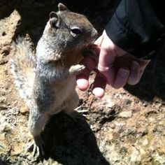 Never seen a squirrel let someone actually pet them.