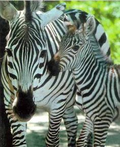 zoo pictures - Google Search