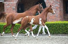 Gorgeous foal!