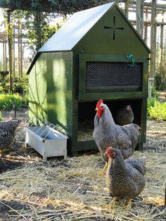 Chickens & Coop