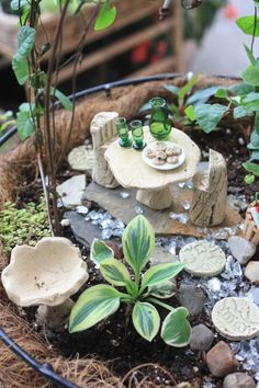A mini fairy garden with all the fixings.....a dining table with a pitcher, cups and a plate of cookies. Enjoy fairies!