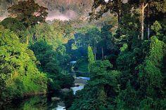 Gorgeous rainforest