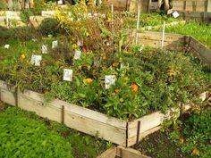 medicinal herb garden <3