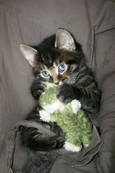 ✮ Love this little kitty!