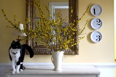 Learn to Force Forsythia  ~I first discovered forsythia when I moved to Nashville, and I fell deeply in love with it.