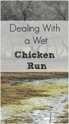 chicken run media essay