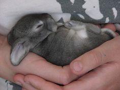 Easter bunny, #cute, #animal, #bunny, #rabbit