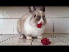 ▶ Bunny Eating Raspberries! - YouTube