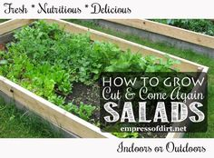 Grow Your Own Fresh Salad Greens – Indoors Or Outdoors    I am sharing this for all beginner gardeners who dream of growing a big container of delicious salad greens you can clip from every night for dinner - but don't know how to get started.