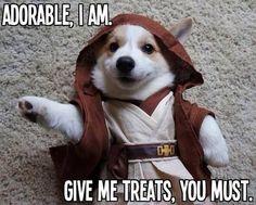 Can't teach an old dog new Jedi mind tricks...