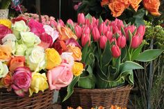 colorful flowers, spring flowers, rose, spring colors, flower baskets