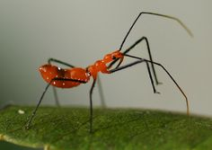 guns, friends, assassin bug, insect predat, bugs, gardens, garden idea, insects, benefici insect
