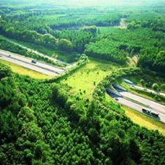 Wildlife Bridge