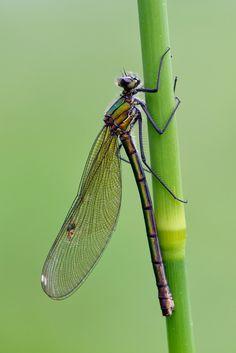 Dragonfly by Mark Johnson