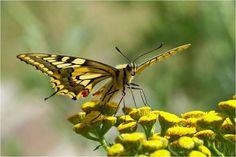 bird, butterflies, art sculptures, yellow jacket, insect, butterfli yellow