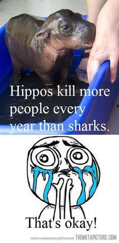 Hahahahhhahhh
