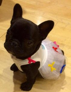 MY ECHO HAS THIS SAME DRESS and she's a black frenchy too!!!