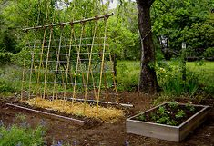 An inexpensive, DIY garden trellis.