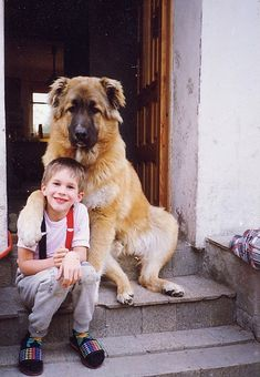 Russian Mountain Shepherd and a boy he owns :)