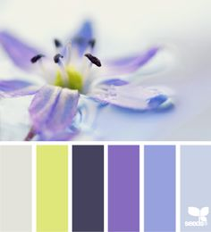 colour, color palettes, living room colors, design seeds, color pallets, flora tone, accent colors, blues, color themes