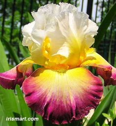 Starship Enterprise Iris!