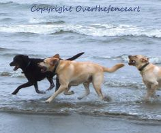 LABRADOR CARD Labradors Run and Frolic  On by overthefenceart, $5.00