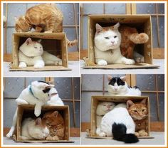 Cats & Boxes