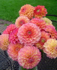 Dahlias -  particularly useful in providing months of flowering if they are given rich soil and adequate moisture. The single and semi-double types with dark stems are easy to place with other plants. Dahlias must be lifted at the end of the year and stored indoors.