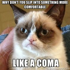 Grumpy Cat is my fave!!